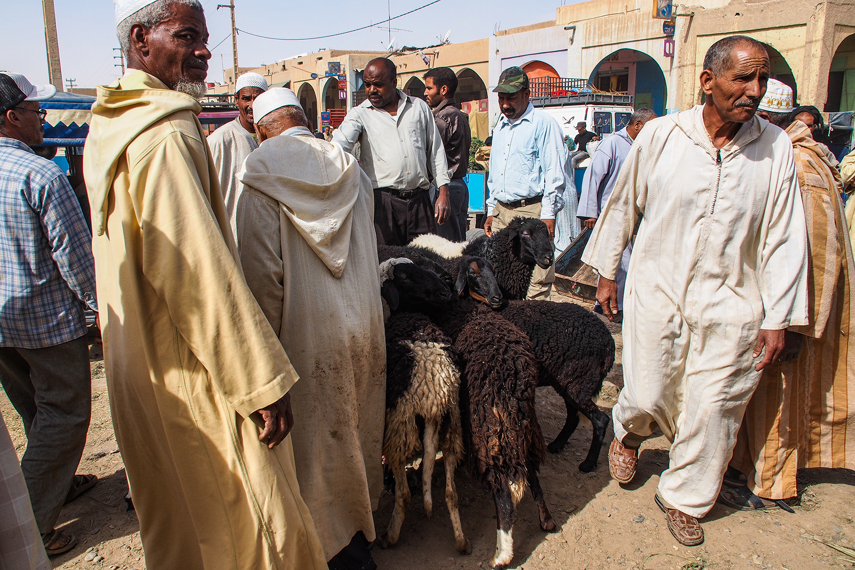 Sheep sales at Rissani Markets in the South.